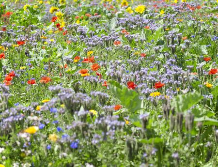detail of a flowering meadow with lots of various herbs and flowers in sunny ambiance Stock Photo - 10863140