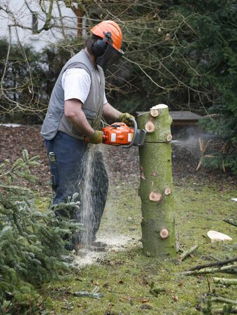 lumberman: forest operation scenery with lumberman at work Stock Photo