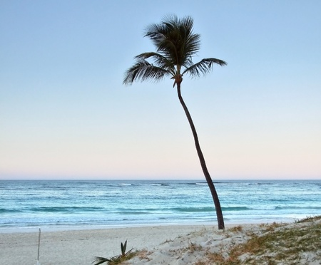 beach with single palm tree at the Dominican Republic, a island of Hispanola wich is a part of the Greater Antilles archipelago in the Carribean region photo
