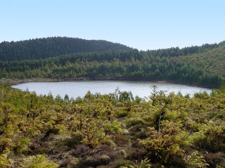 agriculture azores: small lake in overgrown ambiance at Sao Miguel Island