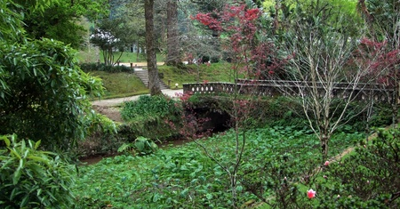 agriculture azores: idyllic overgrown park sceneryat Sao Miguel Island