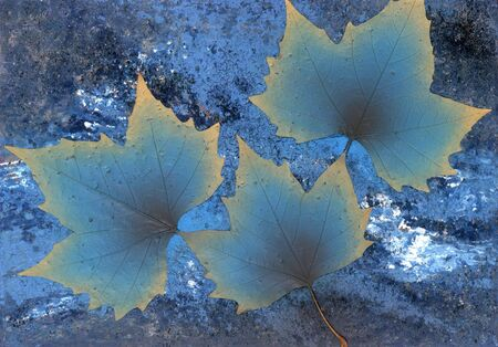 onset: picture painted by me named onset of winter, it shows 3 gradient blue toned dry leaves in abstract blue back Stock Photo
