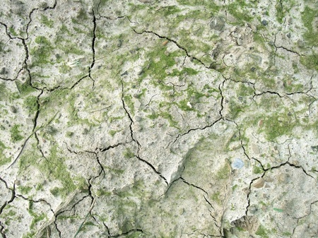 full frame detail of a clefty organic soil surface seen from above photo