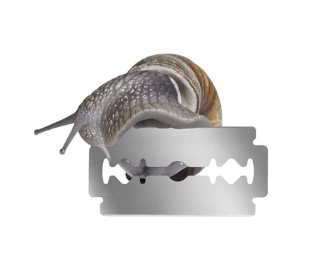 studio photography of a Grapevine snail creeping on the edge of a razor blade in white back photo