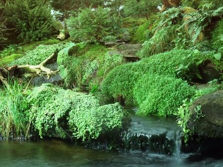 overhanging: detail of some green waterside vegetation