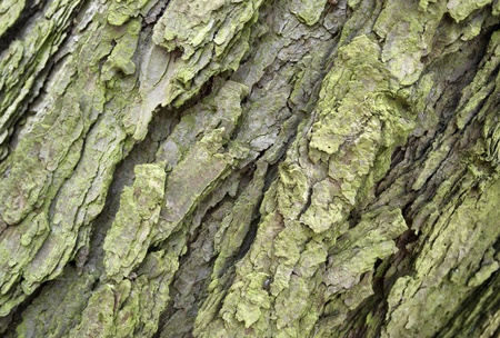 abstract full frame background of a greenish bark detail Stock Photo - 11682795