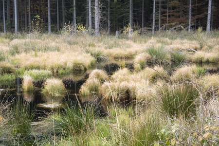 moistness: detail of a swamp in Southern Germany at autumn time
