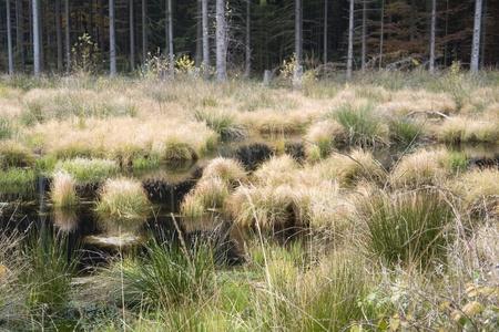 moistness: dettaglio di una palude nel sud della Germania al tempo di autunno