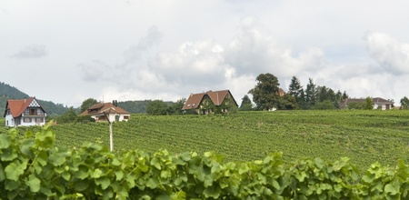 des vins: part of Mittelbergheim, a village of a region in France named Alsace Stock Photo
