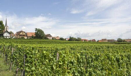 des vins: rural scenery including Mittelbergheim, a village of a region in France named Alsace Stock Photo