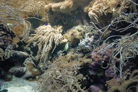 goniopora: underwater scenery showing a colorful coral reef detail with various animal species