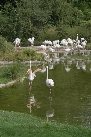 Group of flamingoes in sunny waterside ambiance photo