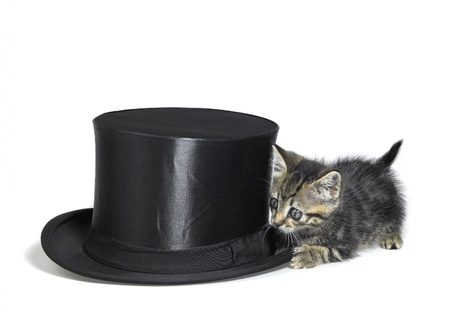 Studio photography of a kitten sneaking around a black top hat, isolated on white photo