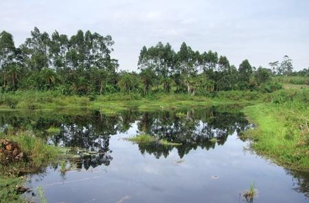 green overgrown waterside landscape around Rwenzori Mountains in Uganda (Africa) Stock Photo - 11014409