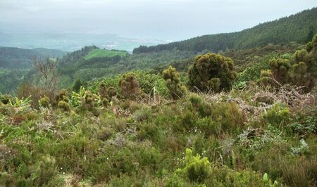 agriculture azores: landscape at S