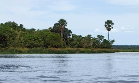 white nile: orilla paisaje que muestra el Nilo Victoria, en Uganda (�frica) Foto de archivo