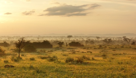 savannah: sunny evening scenery in the Queen Elizabeth National Park in Uganda (Africa)