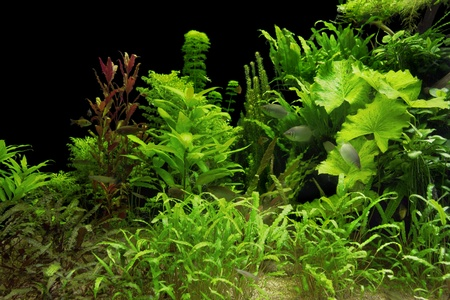 underwater scenery including lots of aquatic plants and some fishes