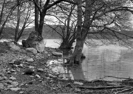 riverside trees: black and white lakeside scenery at Sao Miguel Island