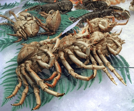 crushed ice: some crustaceans on crushed ice with deco