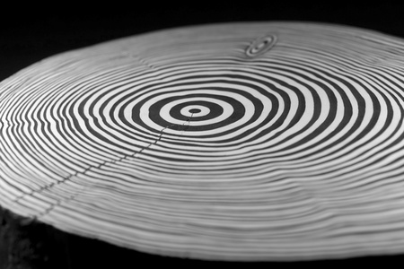 full frame abstract picture showing a piece of wood with black and white painted annual rings photo