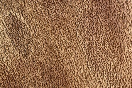 raspy: abstract full frame picture showing rough brown surface inside bark