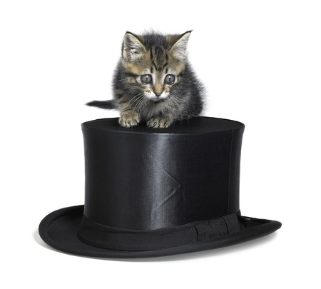 Studio photography of a small kitten sitting on a black top hat, isolated on white photo