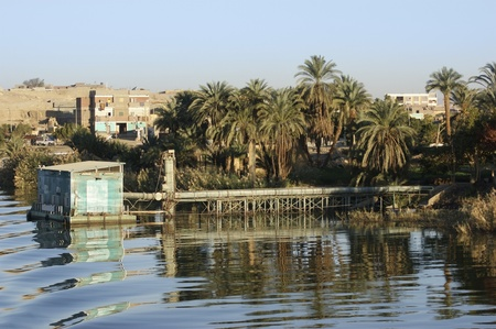 riparian: waterside scenery at River Nile in Egypt (Africa)
