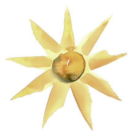 starlike: water color illustration done by me showing a sunny flower in white back Stock Photo