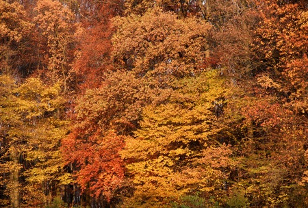detail of a forest with various brown toned foliage at autumn time photo