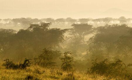 queen elizabeth: dusty scenery in the Queen Elizabeth National Park in Uganda (Africa) at evening time
