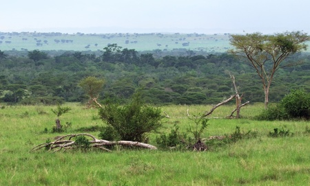 natural scenery in the Queen Elizabeth National Park in Uganda (Africa) photo