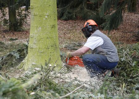 lumberman: forest operation scenery with lumberman at work Editorial