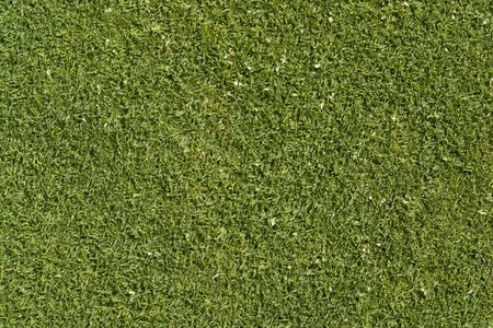 level playing field: abstract golf green detail