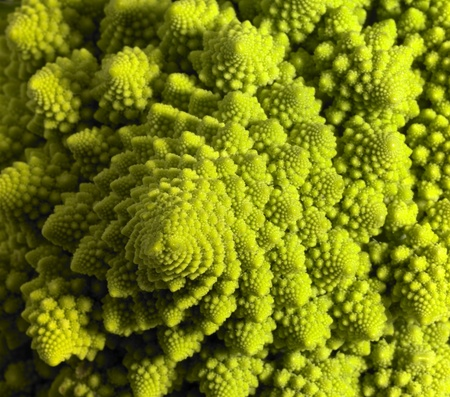 abstract full frame background with a romanesco cauliflower closeup photo