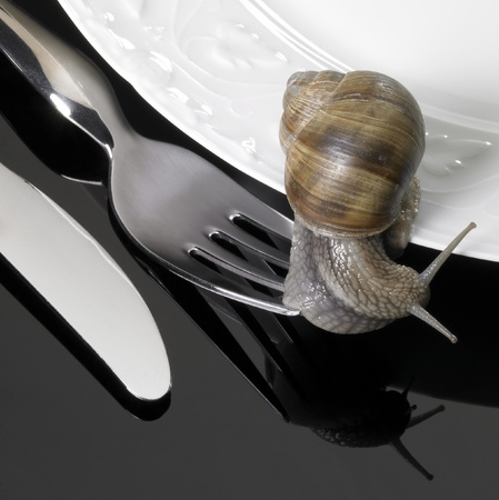 edible snail: studio photography of some dinnerware while a grapevine snail is creeping over, located in dark reflective back Stock Photo