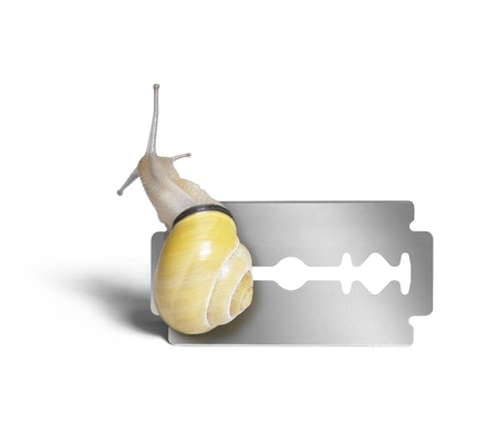 studio photography of a Grove snail while creeping over a razor blade in white back Stock Photo - 11766237