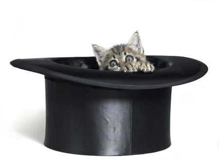 Studio photography of a cute kitten while watching out of a top hat, isolated on white photo