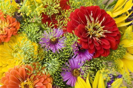 colorful full frame background showing various closeup flowers photo