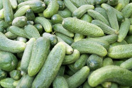 full frame background with lots of small green gherkins Stock Photo - 11015325