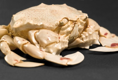 omnivores: detail of a moon crab in dark background Stock Photo