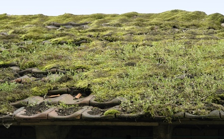 detail of a overgrown roof photo