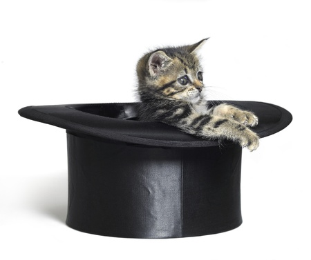 Studio photography of a kitten in a black top hat, isolated on white photo
