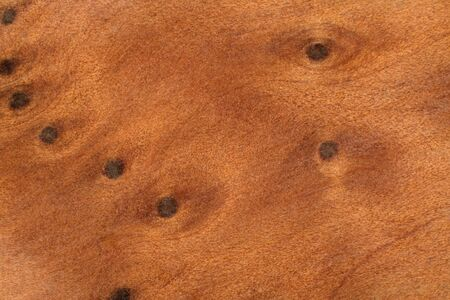 full frame abstract burl wood background photo