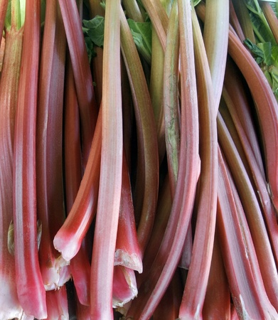 rhubarb: full frame background with lots of rhubarb stalks