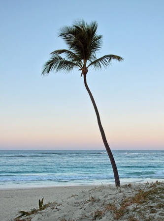 carribean idyllic evening scenery showing a beach with palm tree at the Dominican Republic, a island of Hispanola wich is a part of the Greater Antilles archipelago in the Carribean region photo