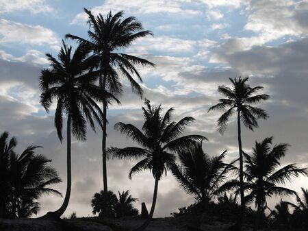 evening sky with palm tree silhouettes at the Dominican Republic, a island of Hispanola wich is a part of the Greater Antilles archipelago in the Carribean region photo