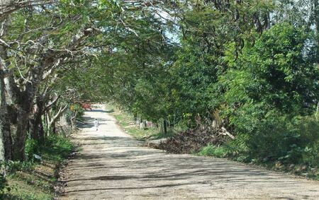 dusty country lane at the Dominican Republic, a island of Hispanola wich is a part of the Greater Antilles archipelago in the Carribean region photo