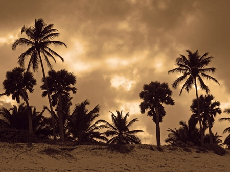 dramatic evening scenery with clouded sky and palm tree silhouettes at the Dominican Republic, a island of Hispanola wich is a part of the Greater Antilles archipelago in the Carribean region photo