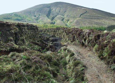 agriculture azores: overgrown landscape at Sao Miguel Island